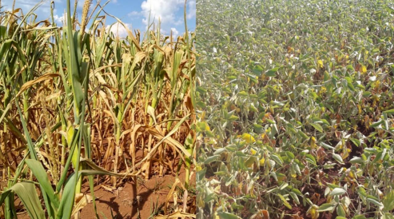 Falta de chuva já causa preocupação a agricultores da região